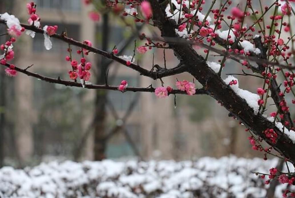 2019年の立春は、季節外れの暖かさに!