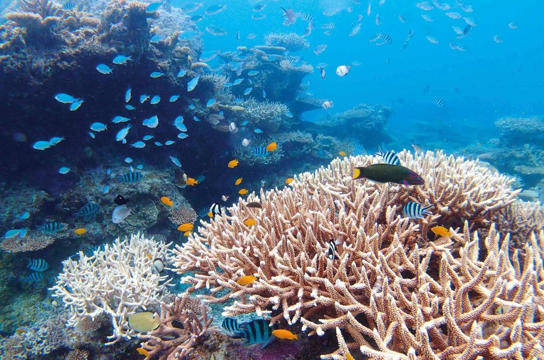 今日は「サンゴの日」です🌸