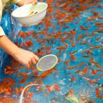 「金魚すくい」の極意