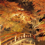 格好の紅葉シーズン到来!