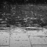 いよいよ梅雨本番