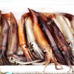 スルメイカの不漁は、まだまだ続く....